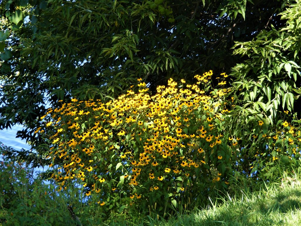How is your garden growing? Picture beautiful Yellow flowers.